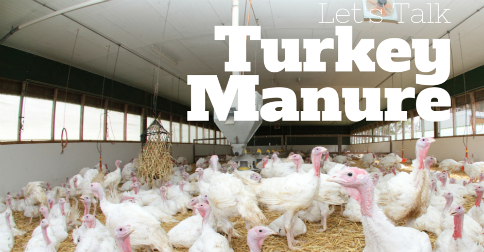 Turkey Manure